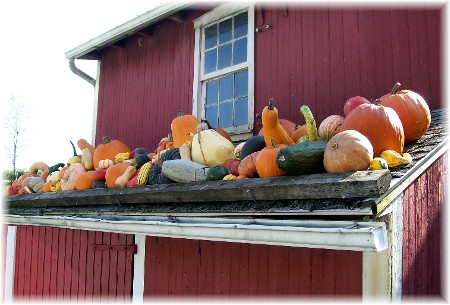 Pumpkins on roof