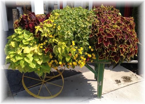 Blue Gate flower cart 8/7/14