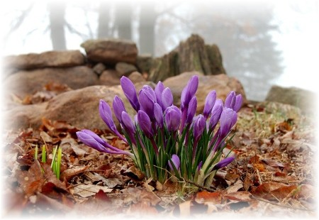 Purple (photo by Doris High)