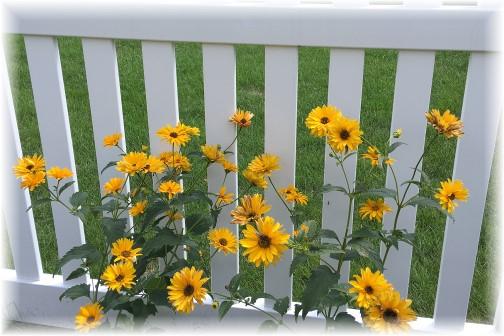 Delavan Wisconsin flowers 8/1/16