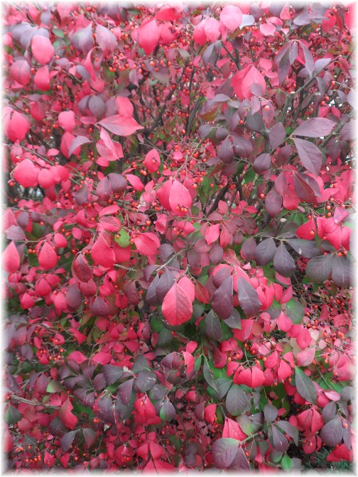 Closeup of burning bush