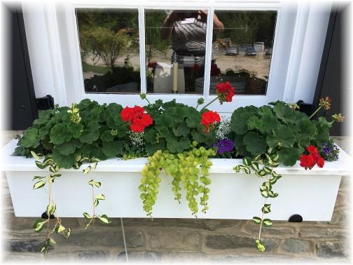 Ironstone Ranch flower box 6/15/17