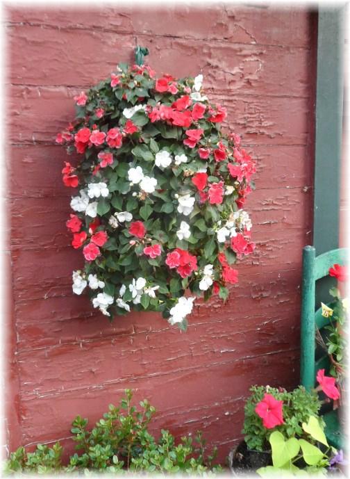 Hanging flowers in Marietta, PA 6/30/13