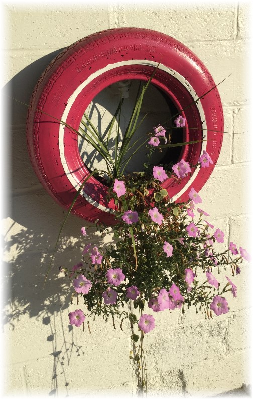 Flowers in painted tire along York Heritage Rail Trail 9/8/15