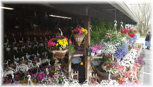 Village Farm Market flowers 4/27/16