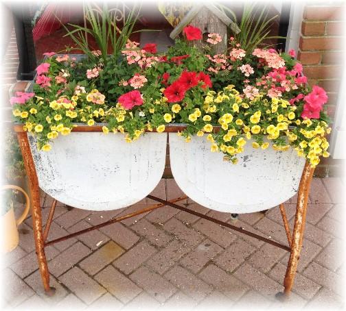 Washbasin flowers Lewes Delaware 6/9/15