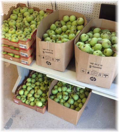 Apples in barn 9/2/14