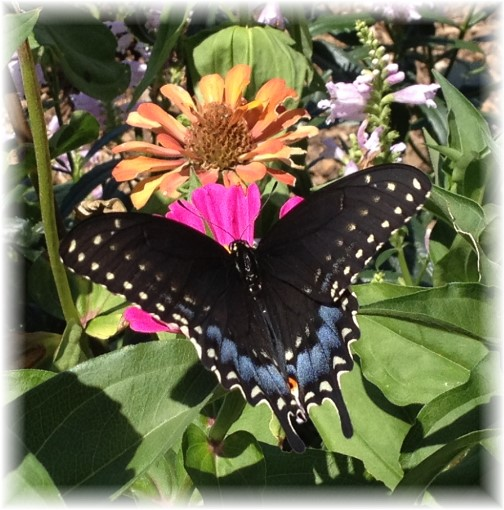 Butterfly and flowers 8/13/15