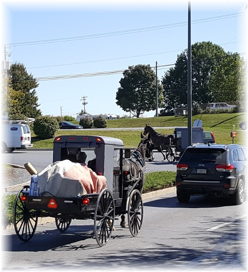 Amish Costco traffic 10/5/16