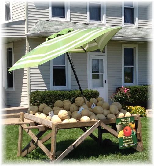 Cantaloupes for sale 7/10/15
