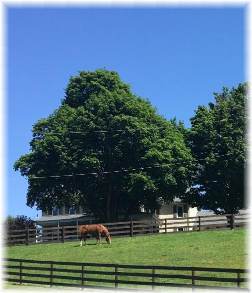 Lancaster County farm scene 6/9/17