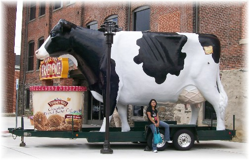 Turkey Hill travelling cow in Lancaster County, PA