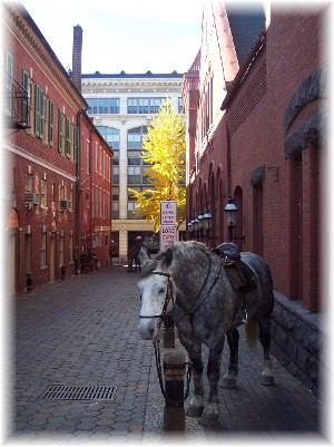 Central Market alley with police horse in Lancaster PA