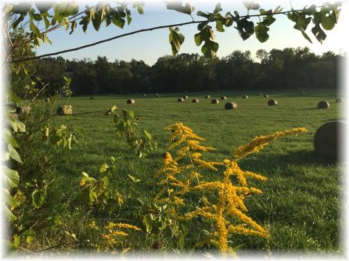 Hay in field along York Heritage Rail Trail 9/8/15