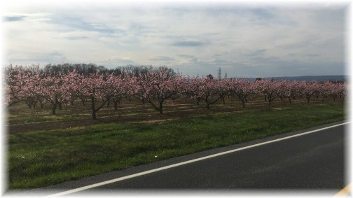 Lebanon County orchards 4/11/17