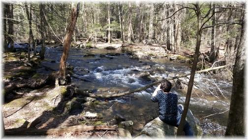 Stony Valley rail trail stream 4/11/17