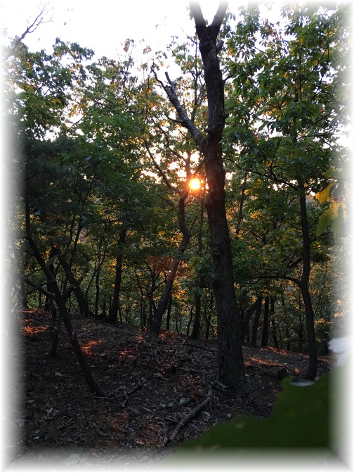 Pennsylvania woods sunset 10/3/16