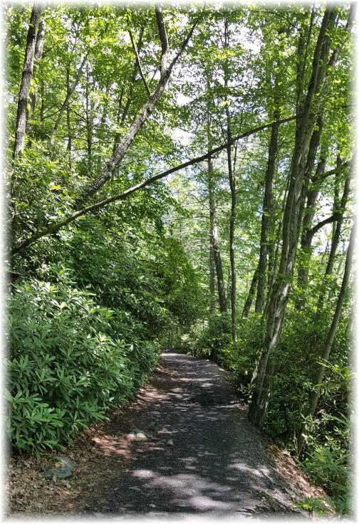 Swatara Falls trail 6/27/17