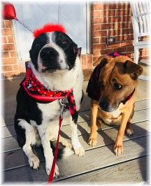 Mollie and Roxie, Valentine's Day 2018, Photo by Ester