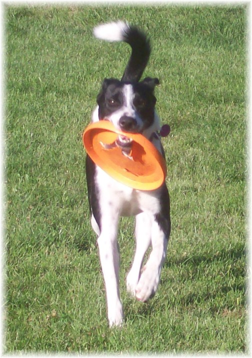Mollie with frisbee