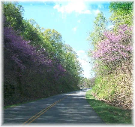 Redbuds along the Blue Ridge Parkway 4/9/10