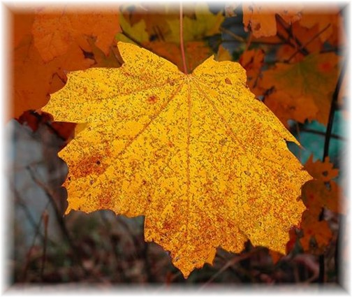 Colorful leaf (Photo by Peter DeHart)