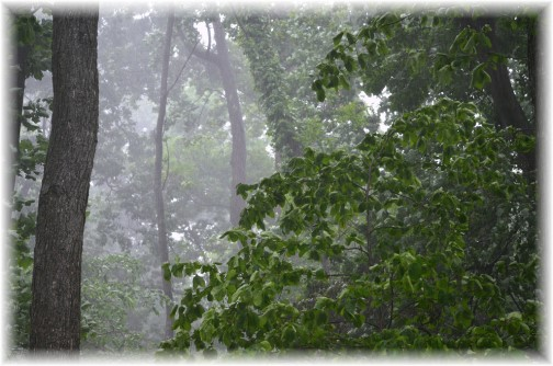 Misty tress (Doris High)