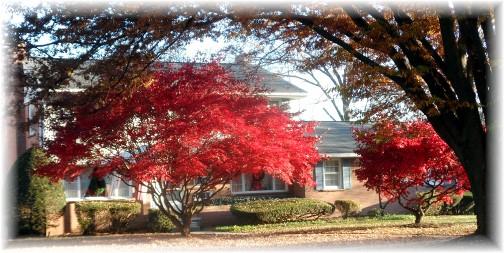 Hershey PA fall foliage 11/20/13