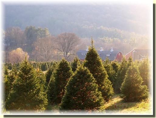Sheerlund Forest tree farm (photo by Mike Martin)
