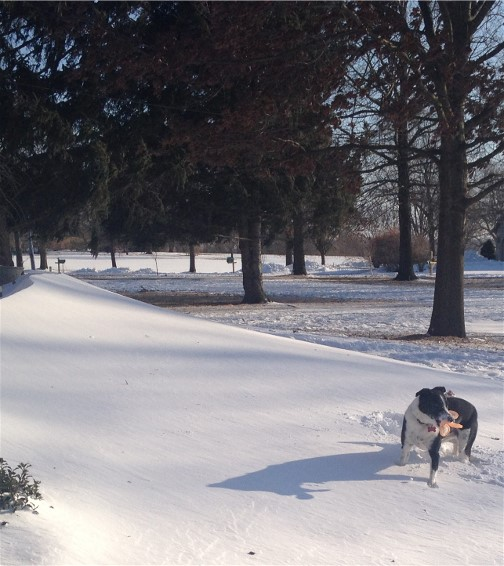 Winter blast 2/15/15 Mollie playing in drifts