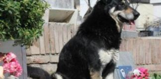 Loyal Dog in Argentina Has Been Waiting By His Owner's Grave for 10 Years
