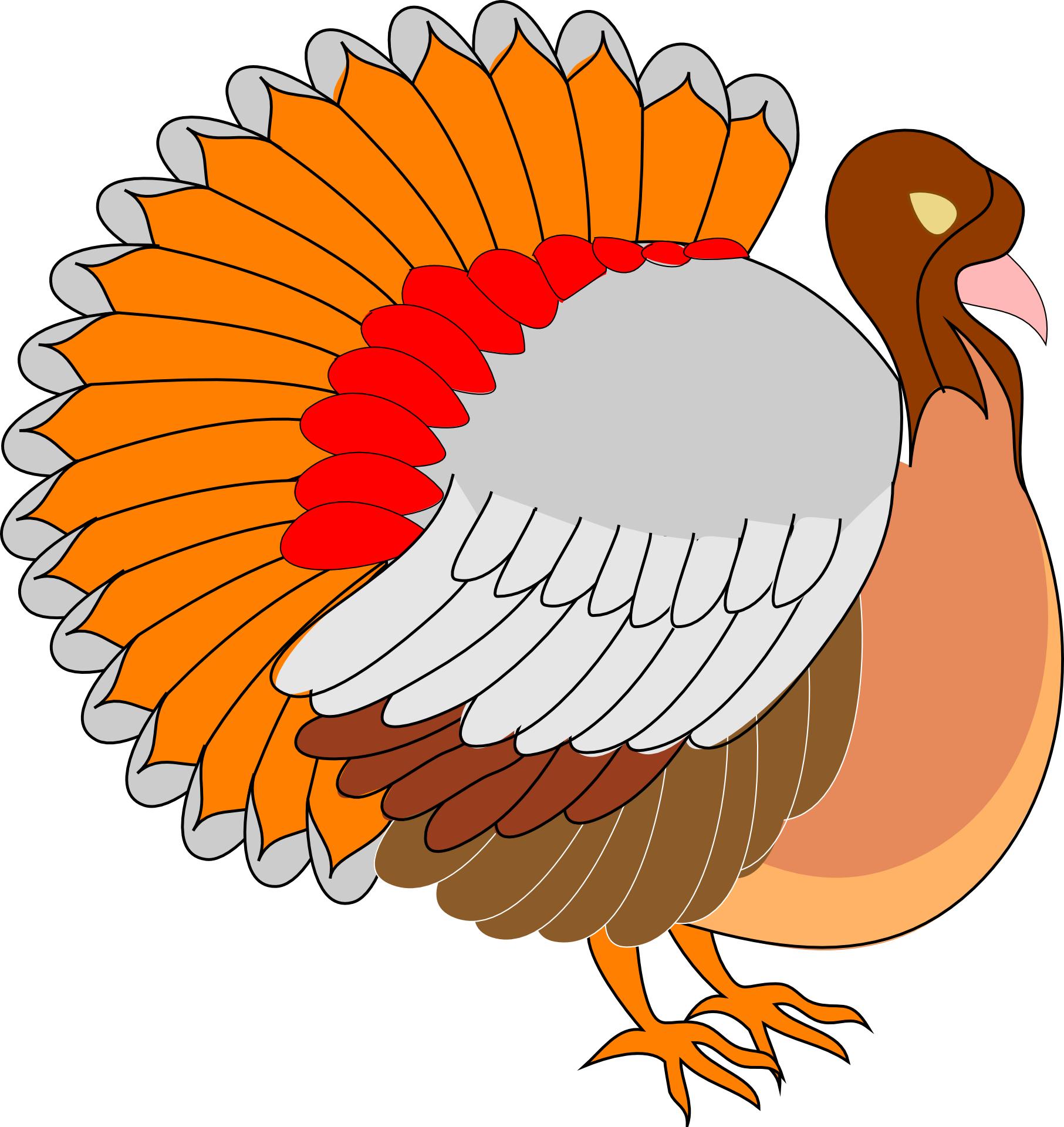 colorful turkey vector