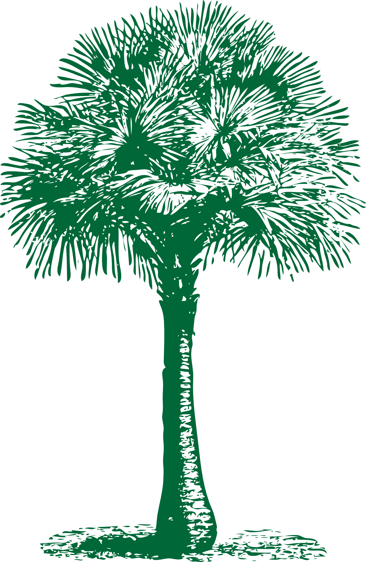 tropical plant-palm tree outline vector