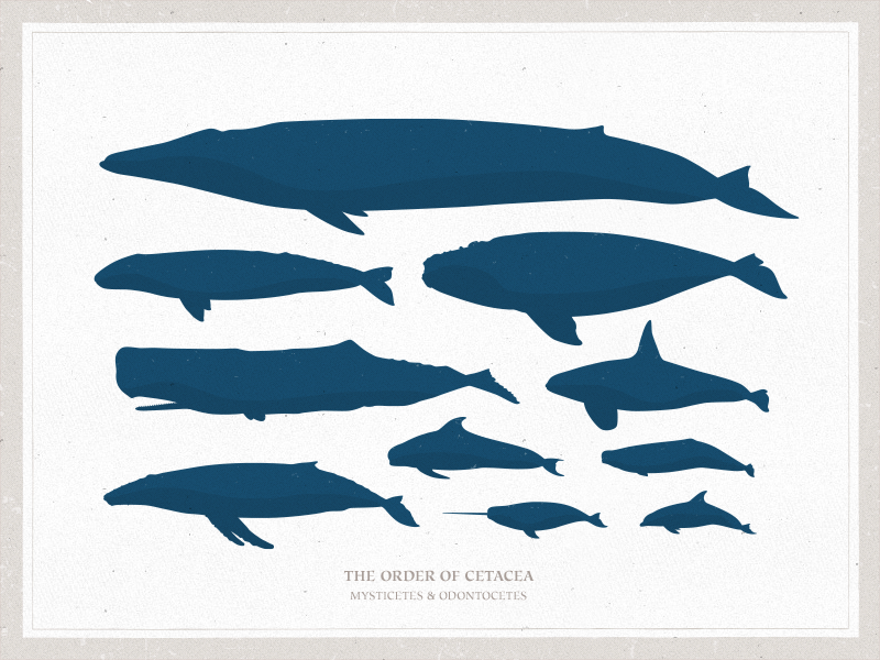 Free Vector illustration Whales,Narwhal,Porpoise,Manatee