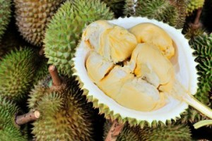 nf_durian_0722