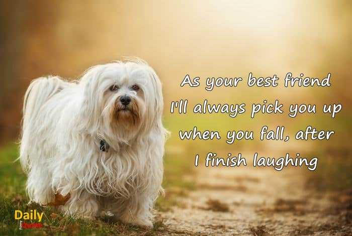Best Friend Funny Quotes When You Fall I Laughing Daily Funny Quote
