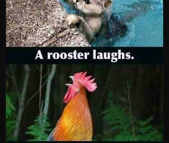 Funny Memes And Hilarious Sayings