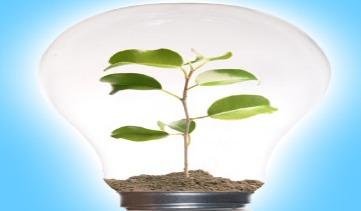 Money and Life: Ecologizing Growth