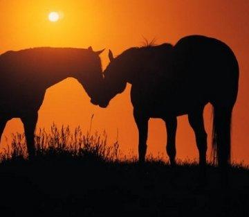 Humans. Horses. Hope.