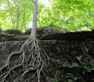 The Understory: Life Beneath the Forest Floor
