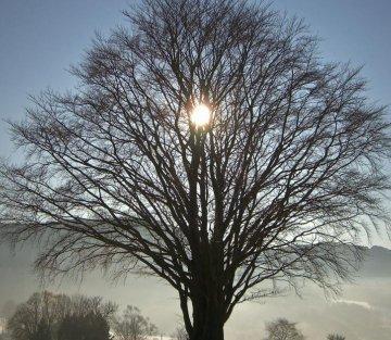 Annie Dillard on the Winter Solstice