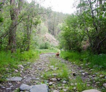 Micah Mortali: Rewilding