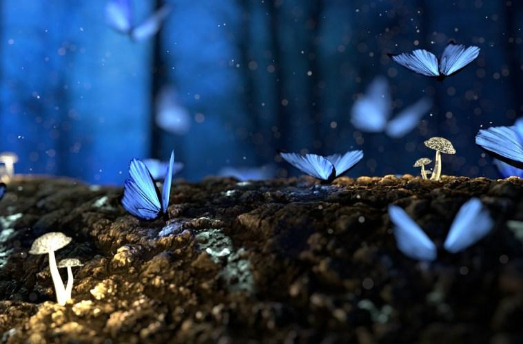 Mushrooms and butterflies