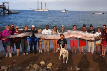 17 Foot Long Oarfish