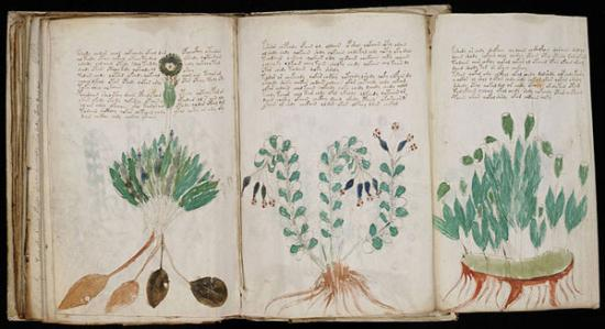 Fold-out page from the Voynich Manuscript