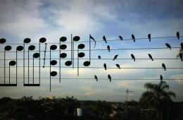 The music of birds on a wire