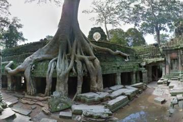 Tree grows upon temple ruins at Ta Prohm