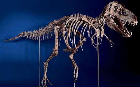 Tyrannosaurus bataar, Photo: U.S. Immigration and Customs Enforcement