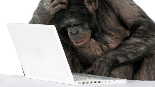 Age / Species / Location? Chimps Join The Internet! - The