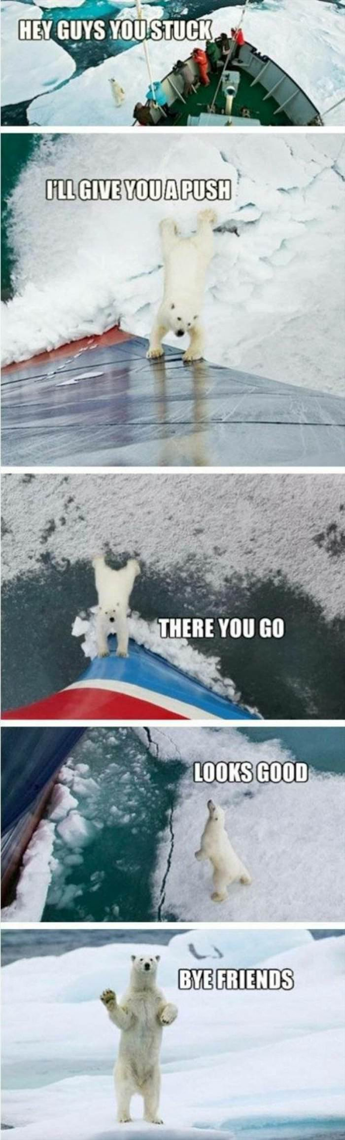 dailyhaha funny pictures